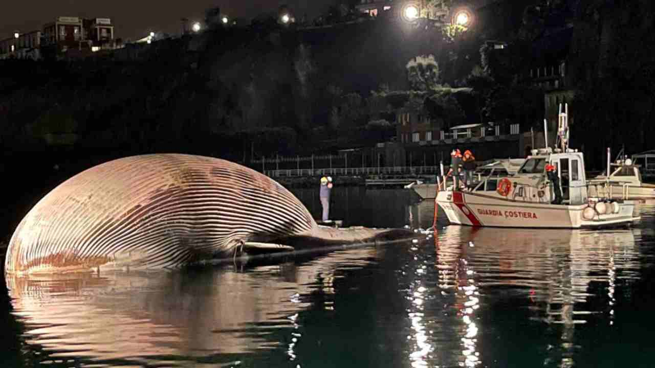 Balena Sorrento