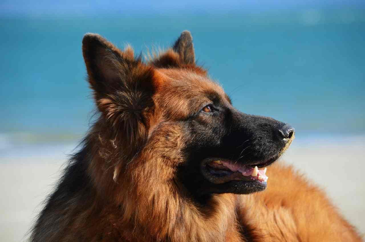 India muore eredità cane